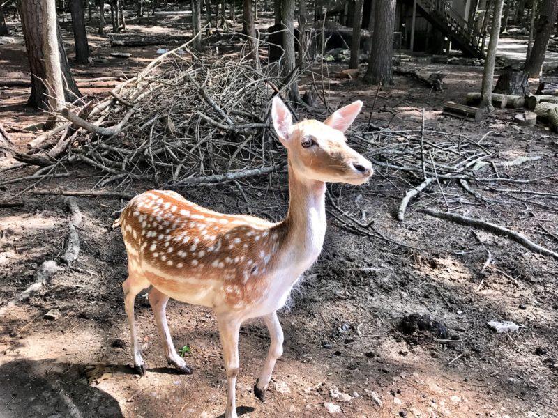 Harmony Safari Park